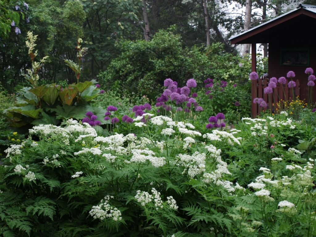 Hill farm nursery cariboo grown cariboo hardy perennials since 1991 for Hills farm and garden