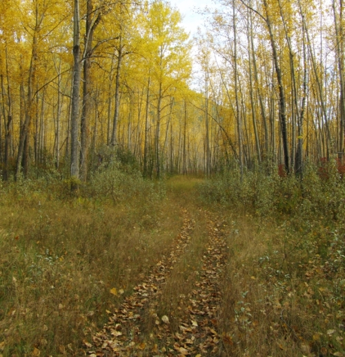 Through the golden forest, down along the river, Macalister, B.C. October 9, 2014