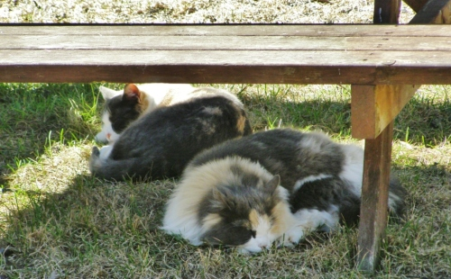 Greenhouse helpers taking a well-deserved rest break in the warm spring sunshine.